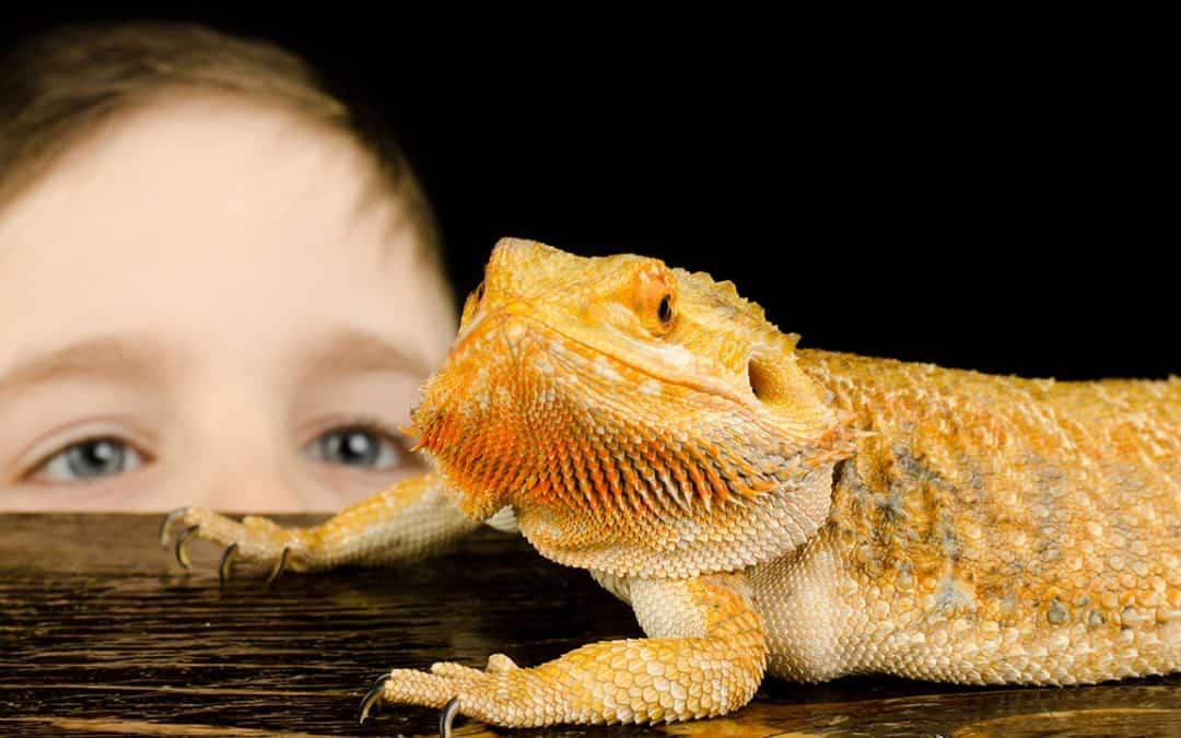 Reptilien als Haustiere für Kinder