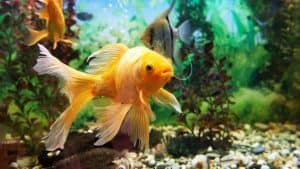 Tipps für das Reinigen des Aquariums