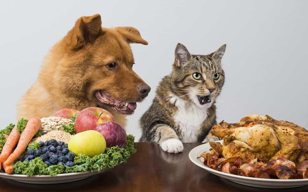 Pflanzliche Kost für Hund und Katze?
