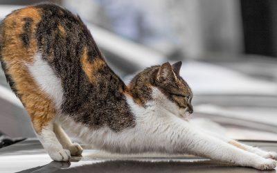 Warum streckt sich die Katze?
