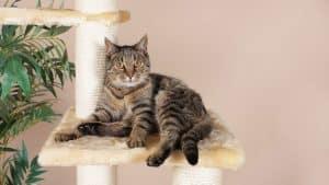 Katzenpsychologie: Hilfe für die Seele