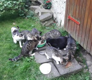 Überfällig: Kastrationspflicht für Katzen 2