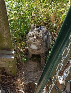 Überfällig: Kastrationspflicht für Katzen 5