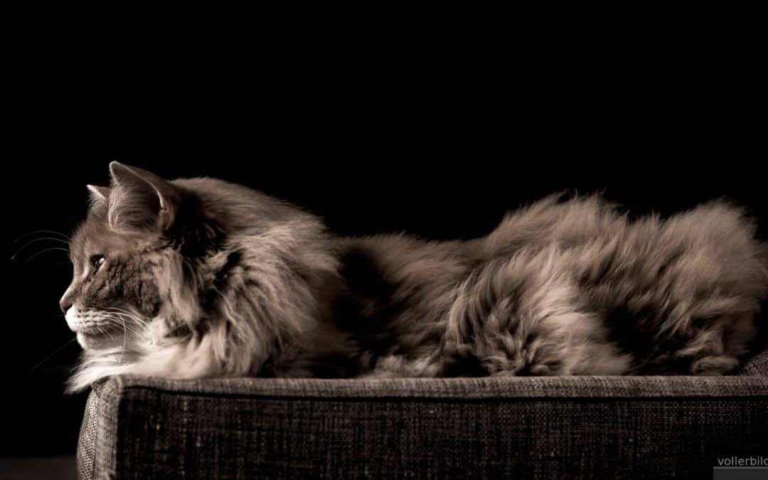 Tierfotografie: Bleibende Erinnerungen