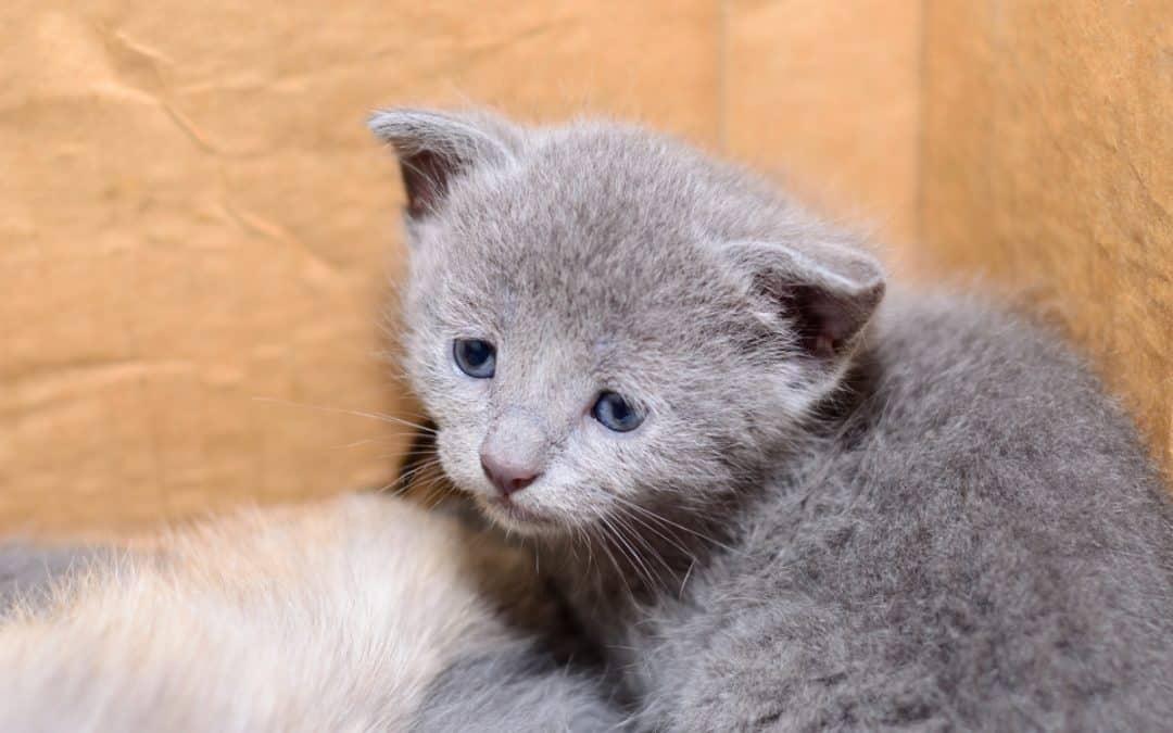 Sind Haustiere als Geschenk geeignet?