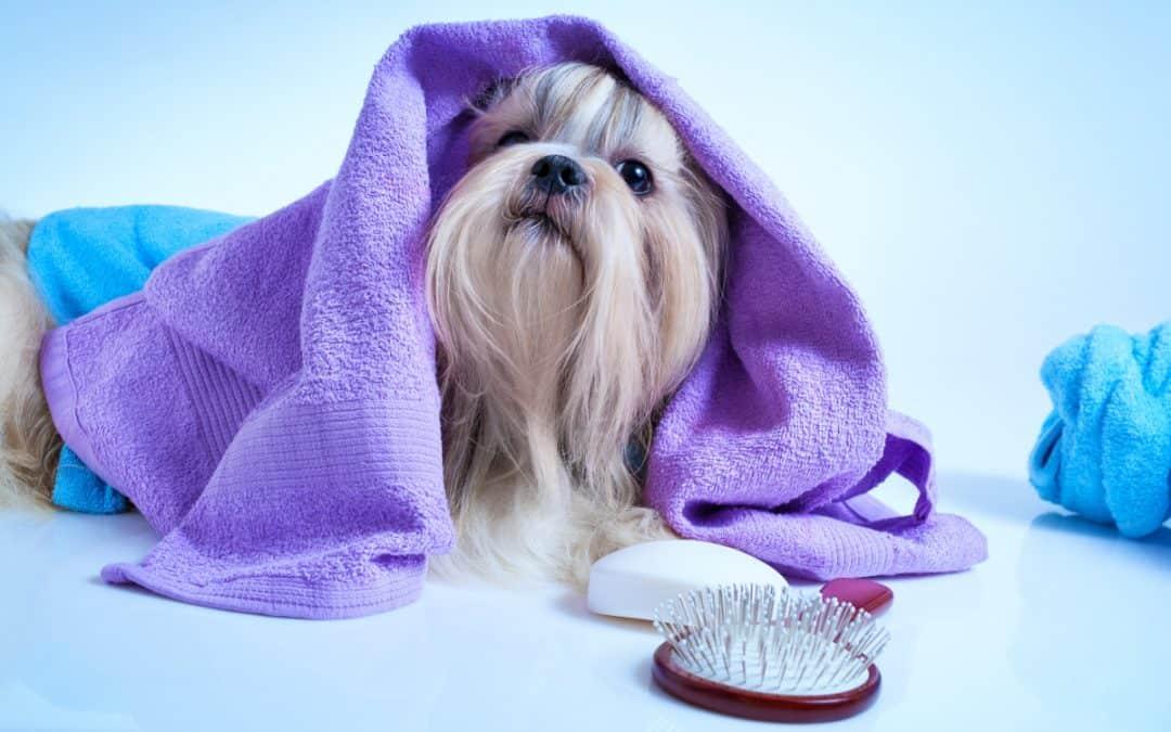 Tägliche Pflege für deinen Hund