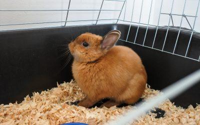 Kaninchen: Die größten Haltungsfehler