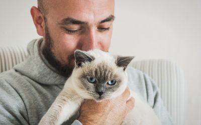 Was tun bei Katzenallergie?