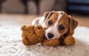 Welpen: kleiner Hund, große Aufgabe