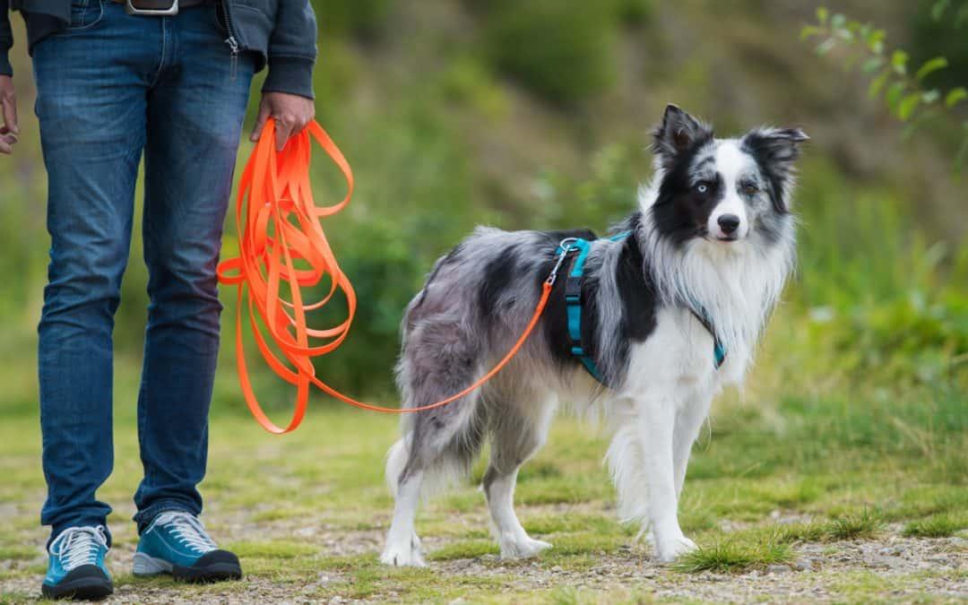 Hunde-Training mit Schleppleine