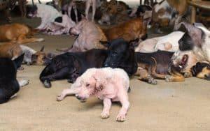 Was ist Animal Hoarding?