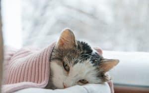 Was ist Katzenschnupfen?