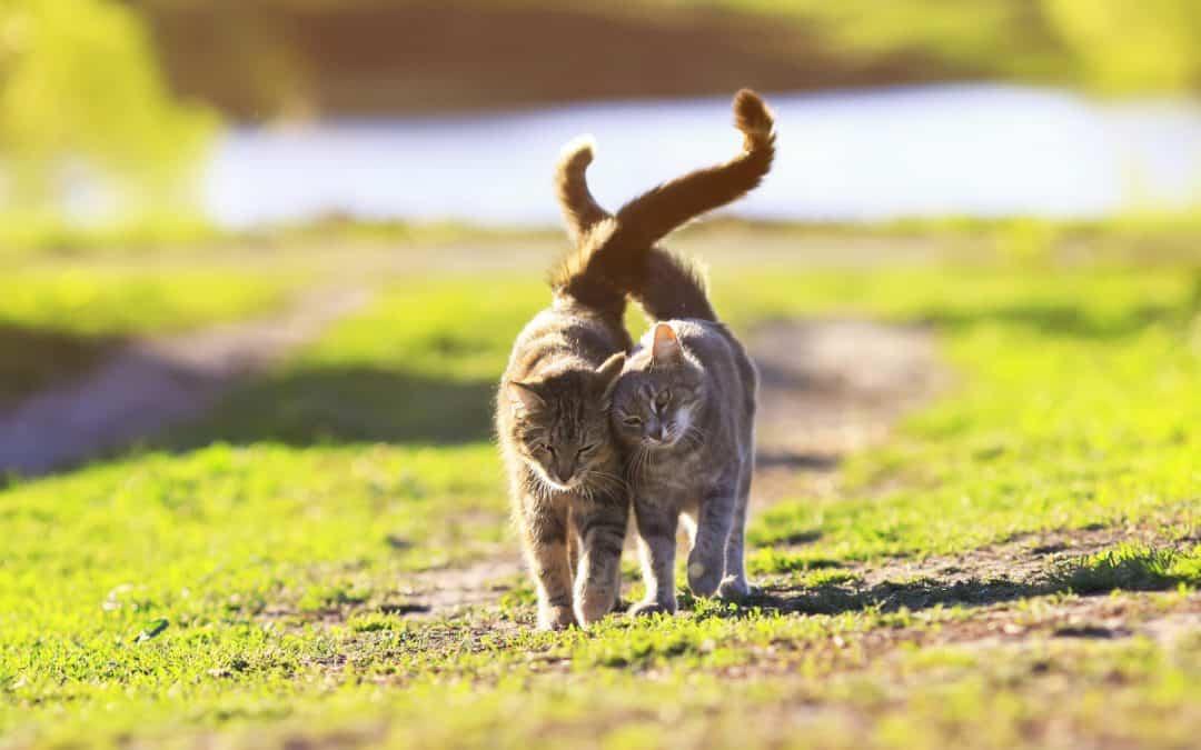 Katzen und Kater richtig kastrieren