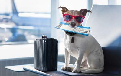 Urlaub mit Hund: Reisen per Flugzeug