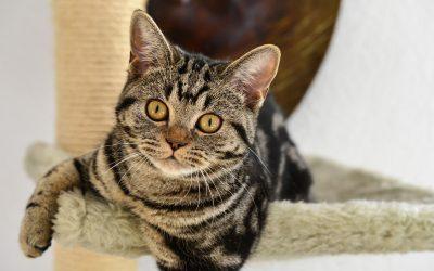 Ataxie bei Katzen: Ursachen und Hilfe