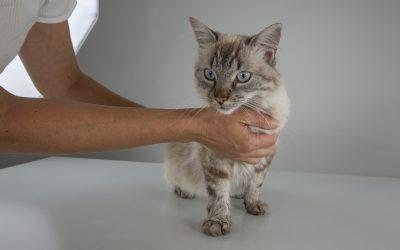 Was ist Katzenseuche?