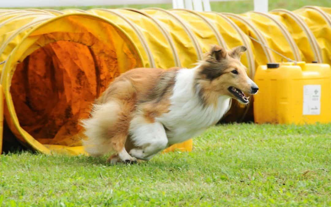 Spiel und Spaß mit Hundesport