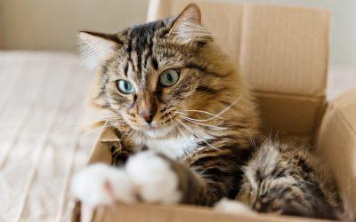 Sieben Einrichtungstipps für Katzen