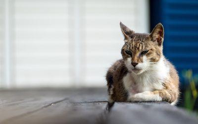 Leben mit einem Katzensenior