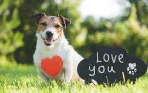 Tierische Geschenke für den Hund