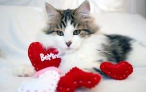 Witzige Geschenke für die Katze