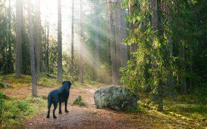 Haustier gestorben – was tun?