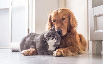 Hund und Katze: Feinde oder Freunde?