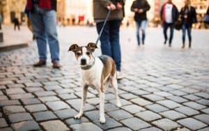 Leben mit Hund in der Stadt