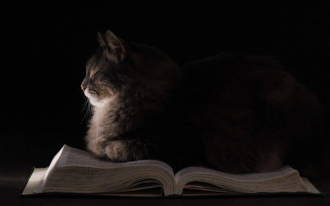 Die Geschichte der Katze
