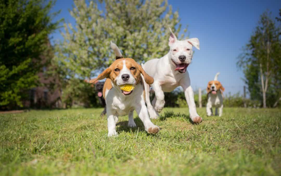 Was macht eine gute Tierpension aus?