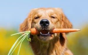 Entdecke das Mikrobiom des Hundes