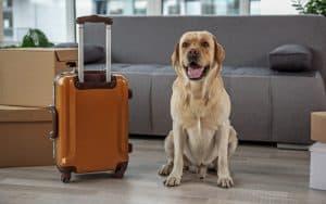 Einreisebestimmungen für Hunde