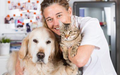 Die 7 Top-Fragen an den Tierarzt