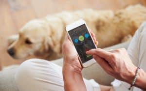 Elektrosmog: Eine Gefahr für Haustiere