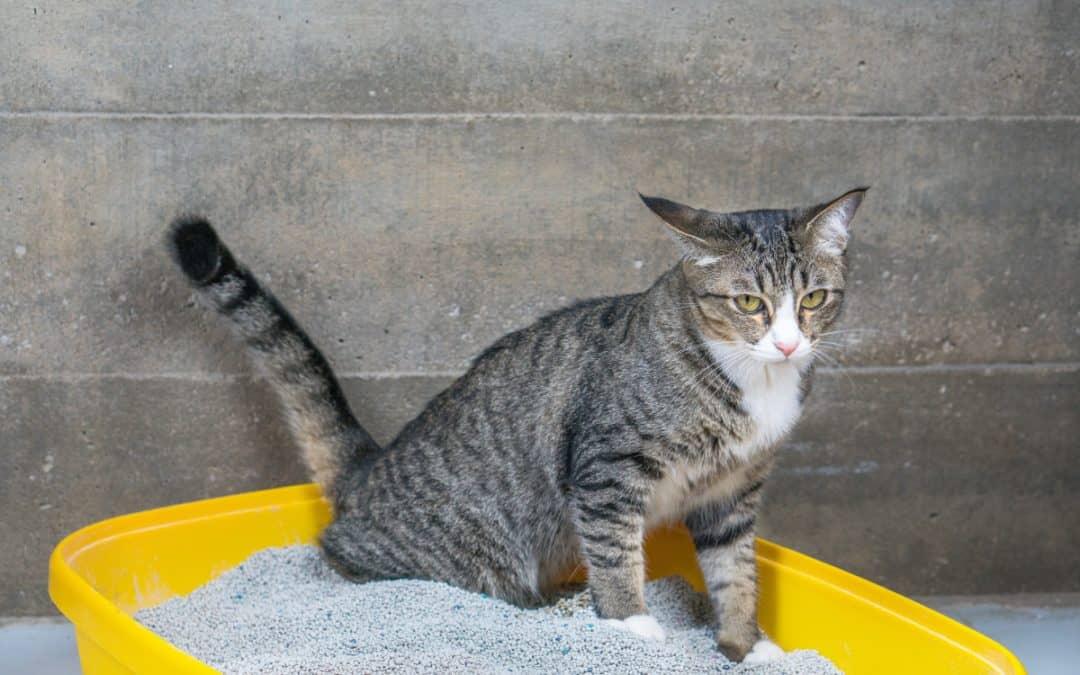 6 Tipps für die ideale Katzentoilette