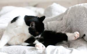 Katzen richtig entwurmen